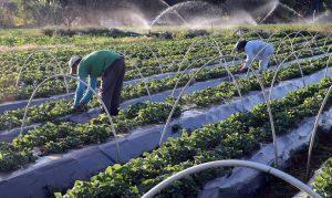 Ministério lança Plano de Investimento para Agricultura Sustentável