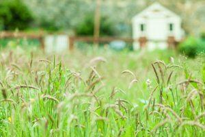 Contribuintes já podem enviar declaração de Imposto Territorial Rural 2020